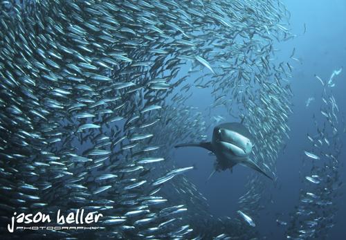 a1-jheller-2001-500